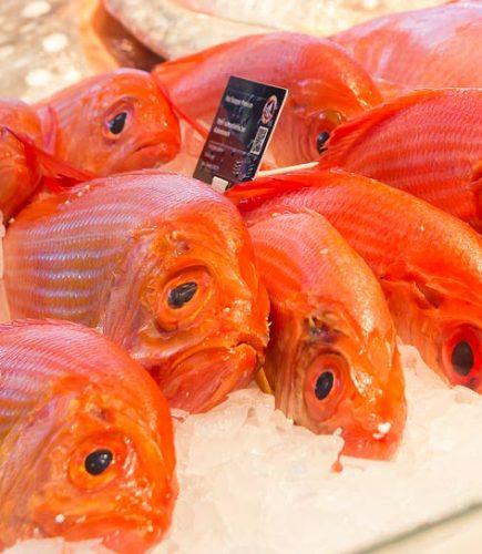 FISCH bleibt FrISCH – Vakuumverpackung in der Fischverarbeitung